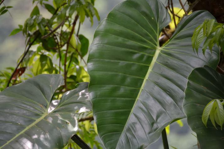CostaRica1-35