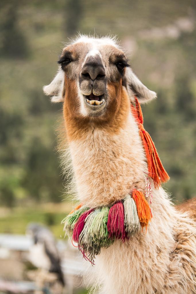 Peru_DSC_8131